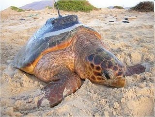 Boa Vista – Volunteers for Turtle Foundation