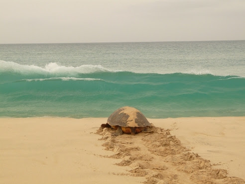 Sal: Turtles continue to nest on Sal – Oct 2010 – by Jacquie Cozens