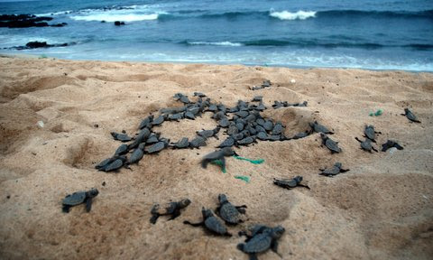 Sal: A day in the life of the turtle project  – by Jacquie Cozens – SOS Tartarugas