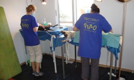 Sal: Sterilisation Campaign – January 2012