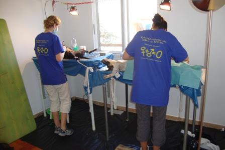 Sal: Sterilisation Campaign – January 2012